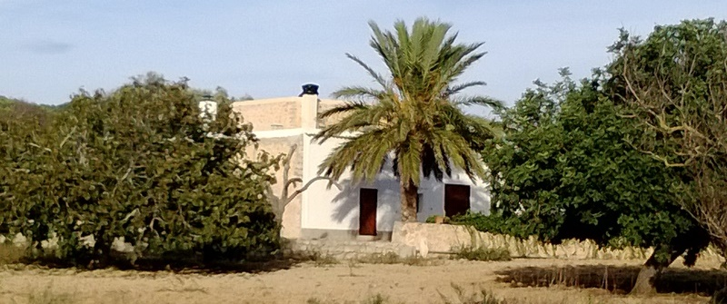 palmhuis-ibz